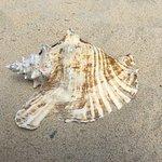 Sea shell found along the beach at Isaccs Bay