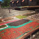Spices drying