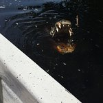 El cocodrilo mas viejito de la laguna (que me pego un susto ya que apareció de repente)