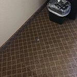 Photo de GuestHouse Inn & Suites Rochester