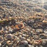 Foto de Sand Key Park