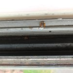 Dirty sill with dead bugs.