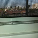 Spiders at window screen