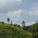 Tea Hill's Bungalow Foto
