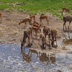 Impala and kudu