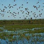BAMURRU PLAINS BIRDLIFE