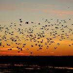 BAMURRU PLAINS BIRDS AT SUNSET