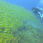 Diving at Phi Phi Island!