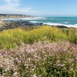 Moonstone beach & flowers