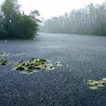 Grassy Waters Nature Preserve
