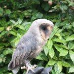 Happisburgh Owls