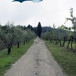 Podere Castellare - Eco Resort of Tuscany Foto