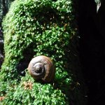 giant snail. a empty one at that but lots of them around, but only if you can spot them