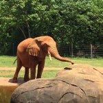 Rafiki the elephant waiting for a treat