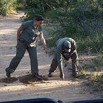 Noelle & Shadrack tracking female Leopard (we found her)