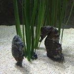 Photo of Sea Life London Aquarium