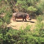 Photo of Ilboru Safari Lodge