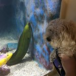 Sandy and the green moray eel!