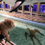 Sandy checking out the nurse sharks!
