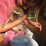 Photo of Bambelela Wildlife Care&Vervet Monkey Rehabilitation Farm