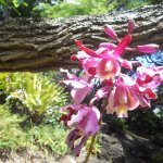 orchid blooming in the garden