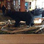 Foto di Cape Fox Lodge