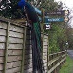 Photo of Curraghs Wildlife Park