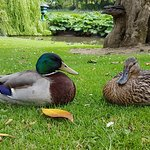 Jules Verne Monument, Big chair, Daliesque Benches and Ducks.