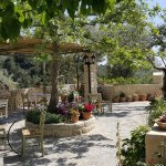 Enjoy your coffee  and your lunch on our terrace under the olive trees !