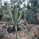 A beautiful succulent