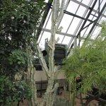 So many beautiful cacti!
