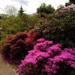 Photo of Botanischer Garten (Botanical Garden of the University of Vienna)