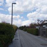 綺麗な生け垣の道