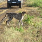 A few photos from our six days at Zulu Nyala