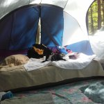 My Boston Terrier Kyah taking a nap in the tent this past weekend campsite #22