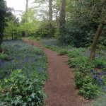 Lovely time of year to enjoy the short bluebell walk