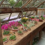 One of the many glasshouses
