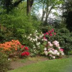 One of the colourful borders