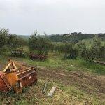 Part of Fattoria Bacio surroundings.