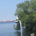 Photo of Toronto Islands Ferries