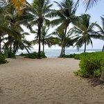 Coconut Palm Grove, great for Meditation, Yoga, Qi-Gong