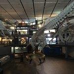 Iziko South African Museum and Planetarium Foto