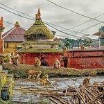 Monkeys at play in Pashupatinath