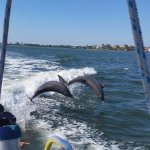 Dolphins playing in the wake