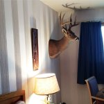 If you want a deer head on the wall, this is the place for you!