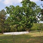 Magnolia Manor Plantation Bed and Breakfast Photo
