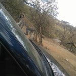 Фотография Hell's Gate National Park