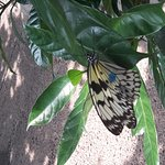 Photo of Cockrell Butterfly Center