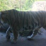 Photo of Henry Vilas Zoo