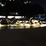 Photo of Mustangs of Las Colinas